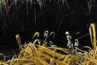 幼虫の発光2
